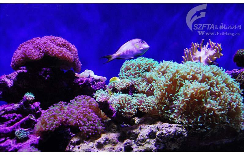 香港海洋公园一日游,珊瑚