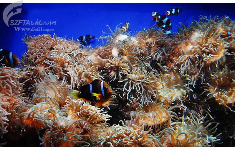 香港海洋公园一日游,珊瑚丛中穿梭的小鱼儿!