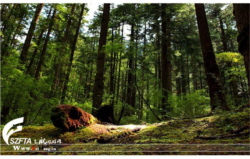 日则沟原始森林