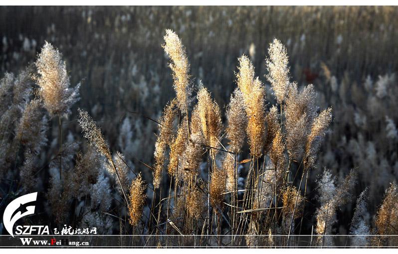 纳林湖景色
