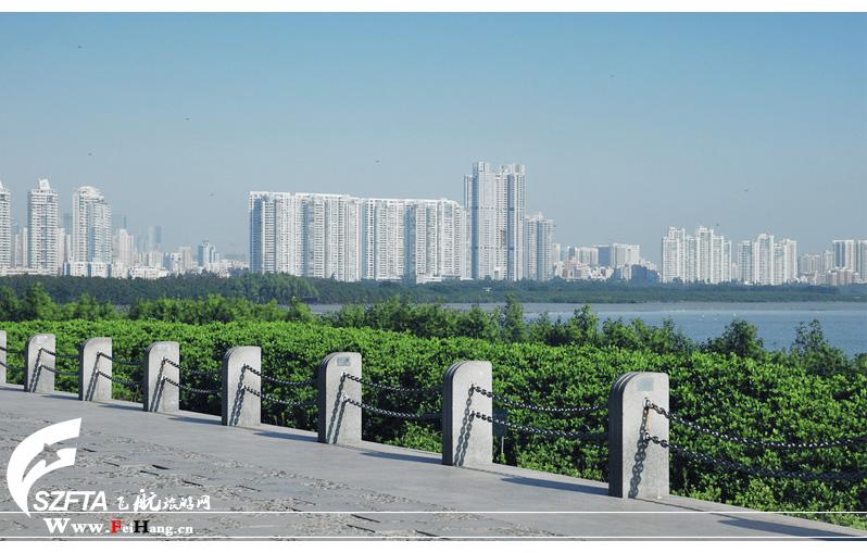 深圳红树林